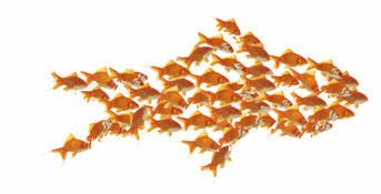Fish team